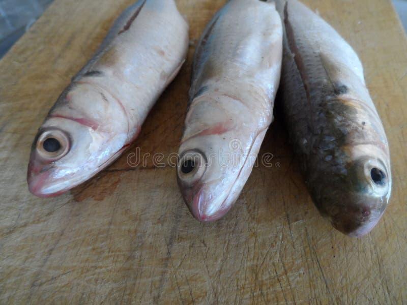 Three fishes royalty free stock photos