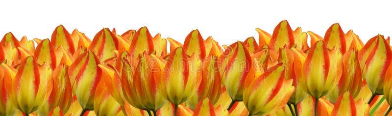 Download Three flower border pieces stock illustration. Illustration of beautiful - 7988295