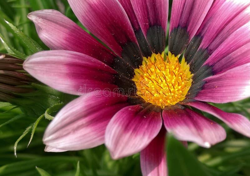 Three flowers in the garden stock photo