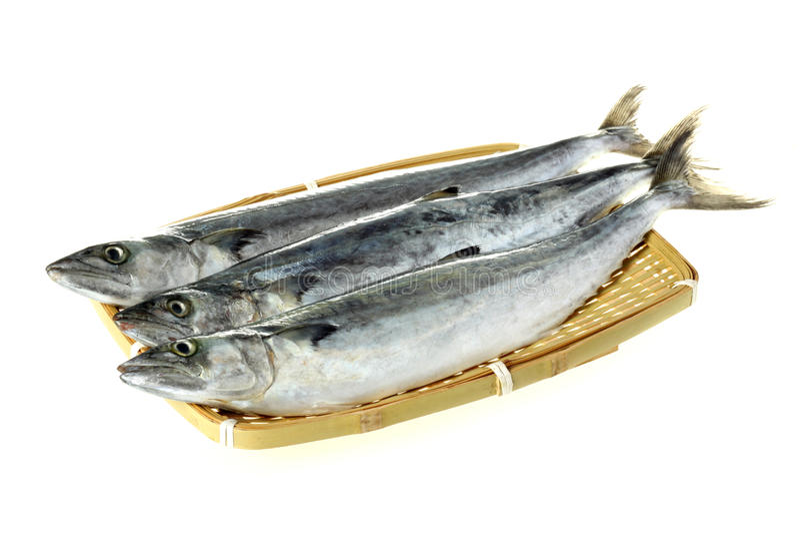 Three Fresh Fish Royalty Free Stock Images