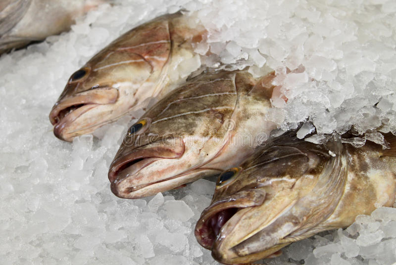 Download Fish in Ice stock photo. Image of fins, delicious, restaurant - 30231358