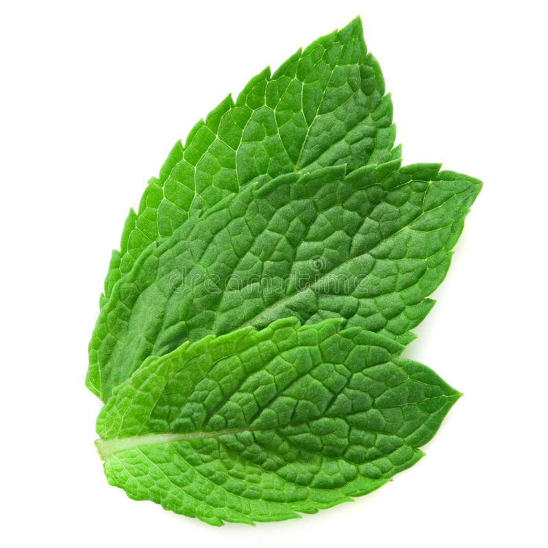 Download Three fresh mint leaves stock photo. Image of fresh, green - 23507712