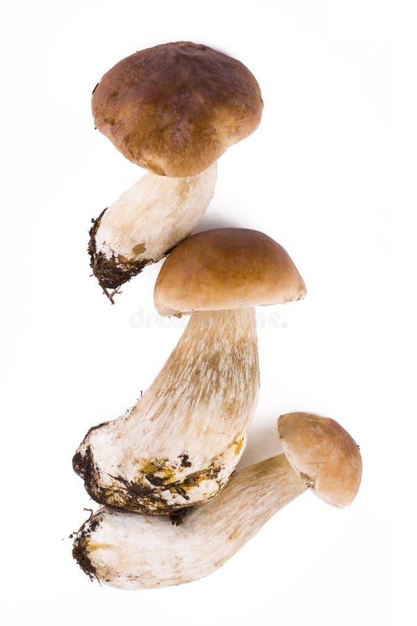 Download Three fresh mushroom stock image. Image of season, ingredient - 16108601