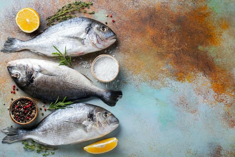 Three fresh raw Dorado fish with spices and olive oil on a blue rusty table. Top view with copy. Flat lay.  royalty free stock image