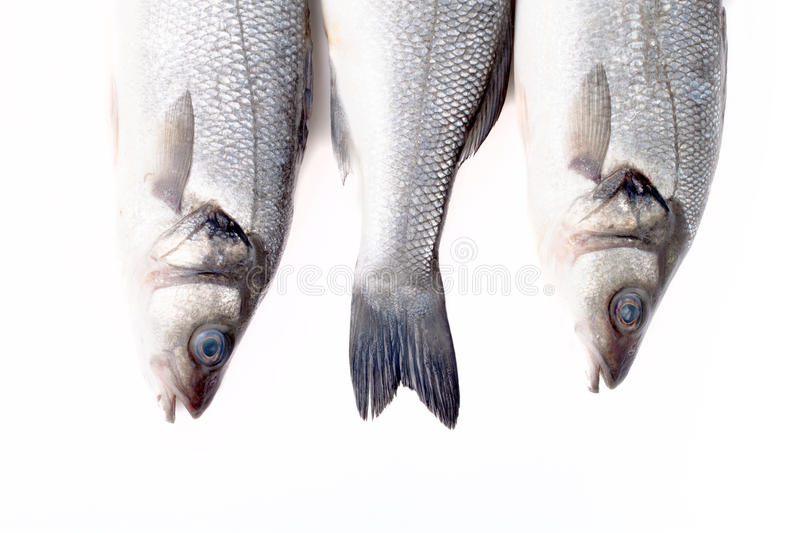 Three fresh sea bass on a light background. tails and two heads. stock images