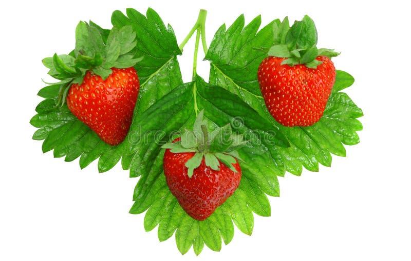Three Fresh Strawberries. Isolated Stock Photography