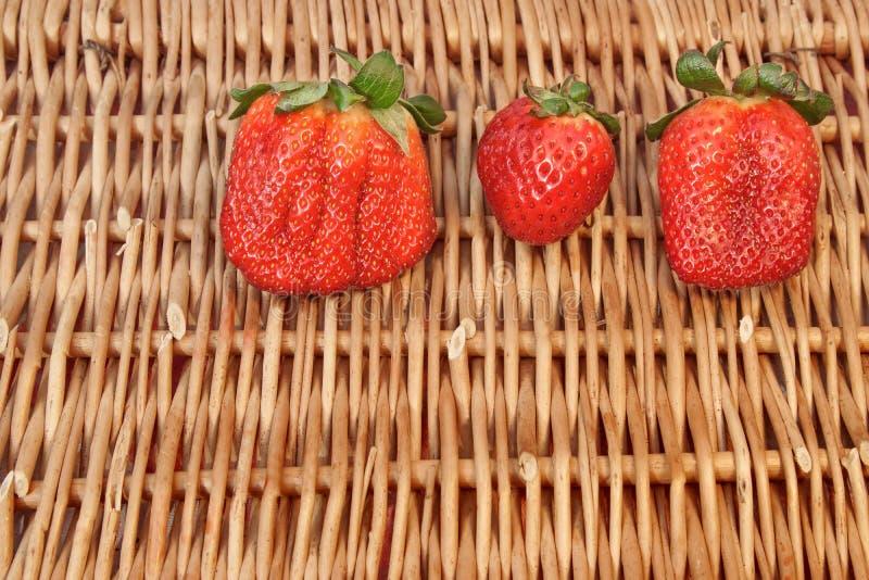 Download Three Fresh Summer Organic Strawberries Still Life, Stock Photo - Image of large, fruit: 39511120