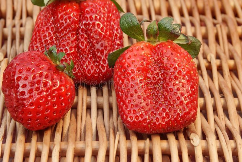 Download Three Fresh Summer Organic Strawberries Still Life, XXXL Backgro Stock Photo - Image of berry, isolated: 39512058