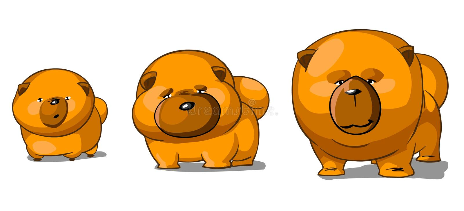 Three funny chow chows