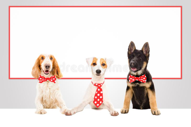 Three funny office dogs royalty free stock images