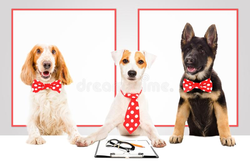 Three funny office dogs stock photography