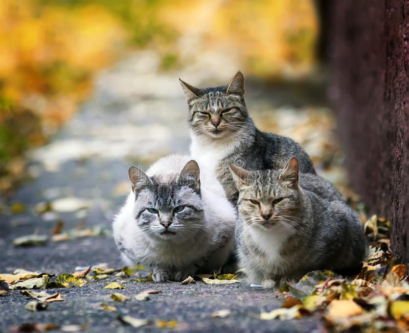 Three funny stray cat lying in the street in the sun in the fall. And the entrance stock images