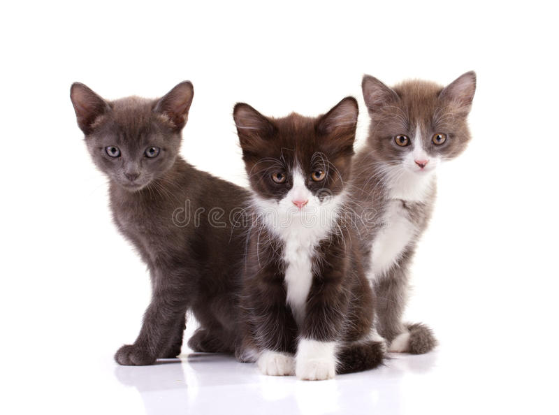 Three furing kittens stock photography