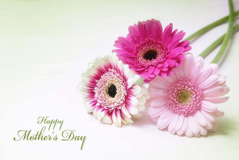Three gerbera flowers in pink and white on a bright background with copy space, greeting card with text Happy Mother`s Day stock images