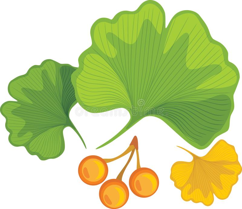 Three ginkgo biloba leaves with nuts royalty free stock photography