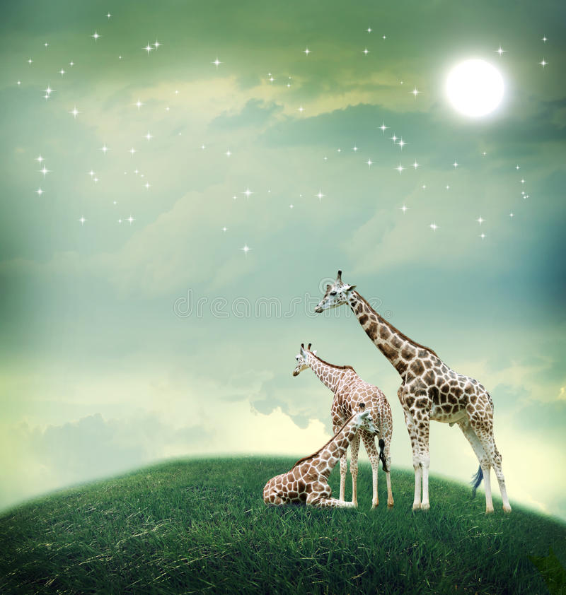 Three giraffes on the fantasy landscape stock photo