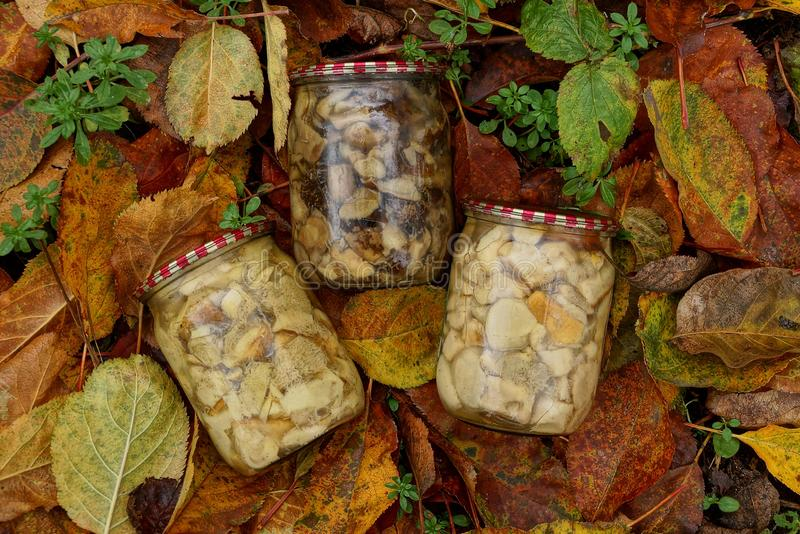 Three glass jars with canned mushrooms on brown dry leaves royalty free stock images