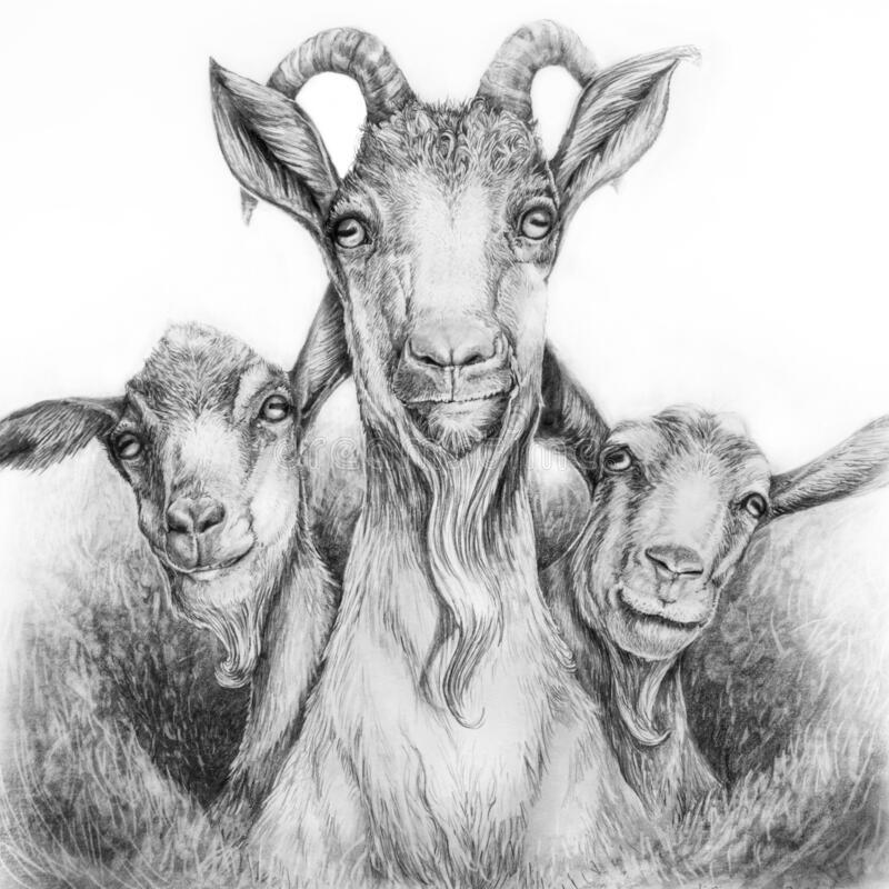 Free Three Goats Graphite Drawing Stock Images - 185048174