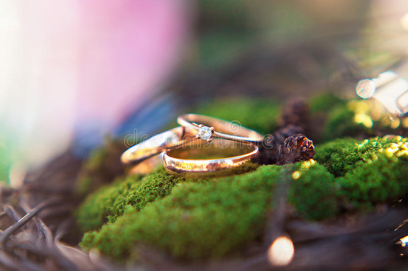 Three golden wedding rings on the moss background. stock image