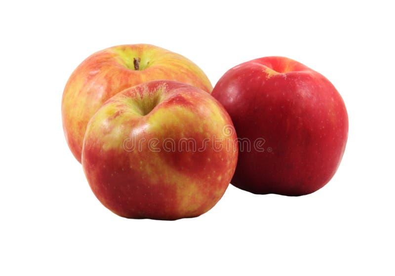 Three gravenstein apples stock image