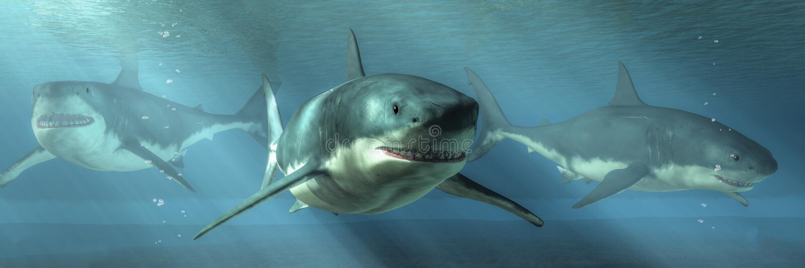 Three Great White Sharks. Swim towards you out of the depths. The predators are the rulers of their undersea kingdom royalty free illustration