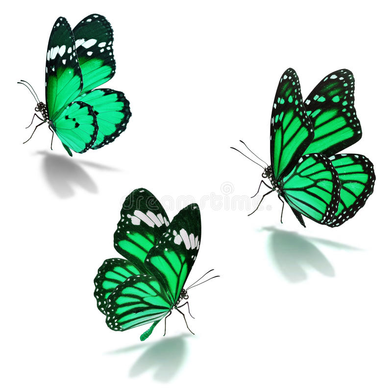 Three green monarch butterfly royalty free stock photos