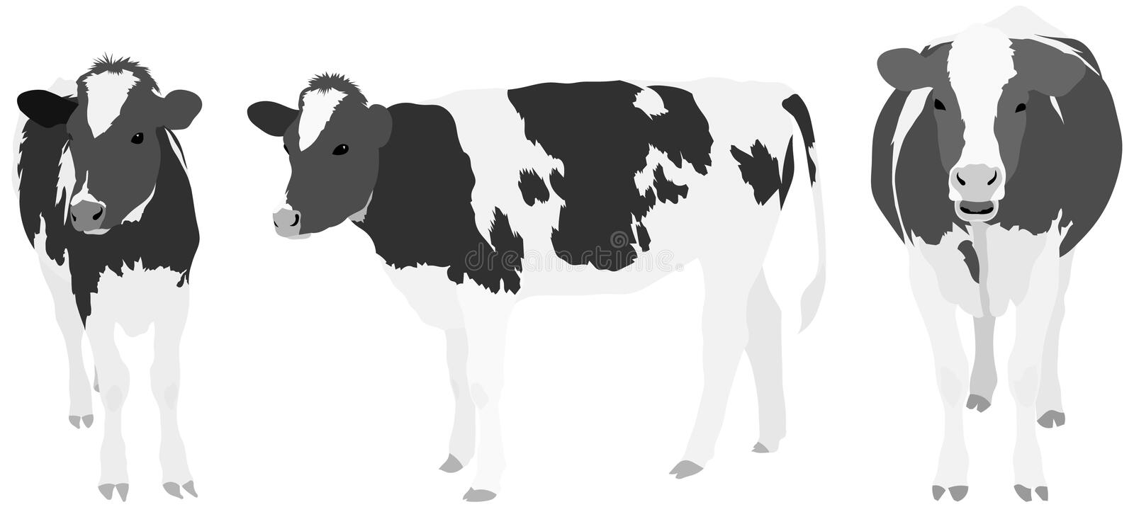 Download Three Greyscale Cows stock vector. Image of dairy, illustration - 14151699