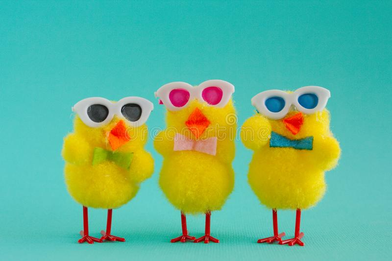 Three Groovy Chicks wearing sunglasses on a Aqua Background. Three groovy yellow fuzzy pom pom Easter chicks sporting sunglasses for a cool look on an aqua royalty free stock image