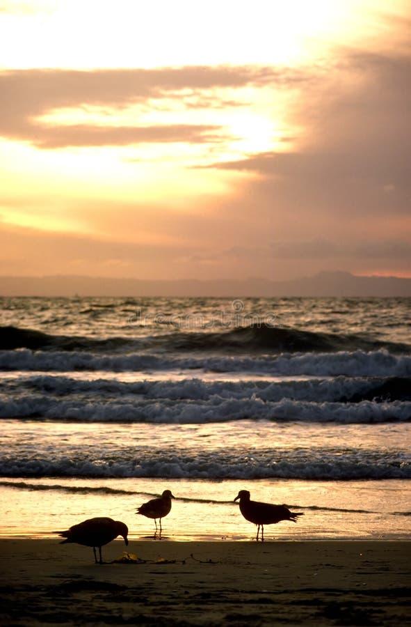 Three Gull Sunset