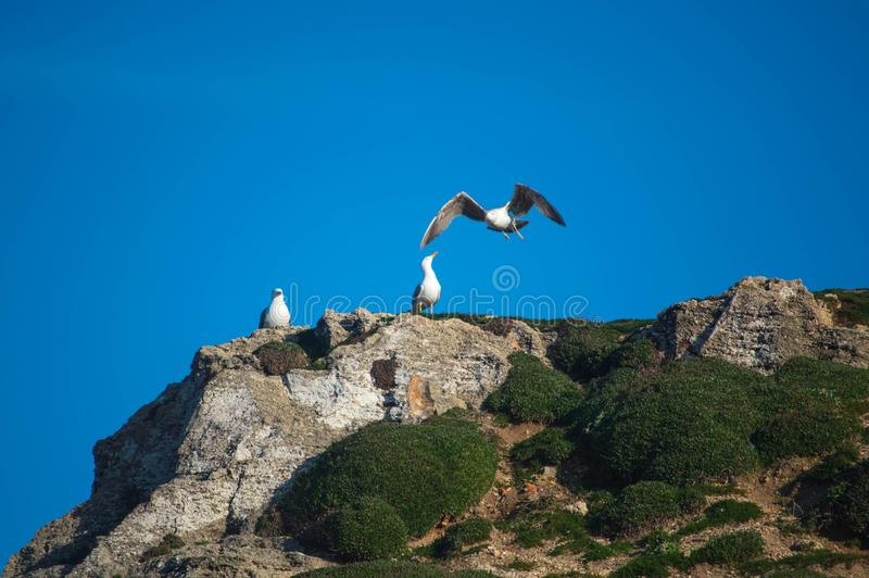 Three gulls on the mountain stock photography