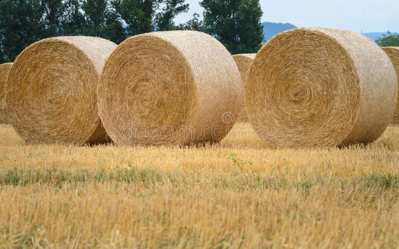 Three Hay round bales in field on a hot summer day against the blue sky, Catalonia village. Hay round bales in field on a hot summer day against the blue sky stock photo