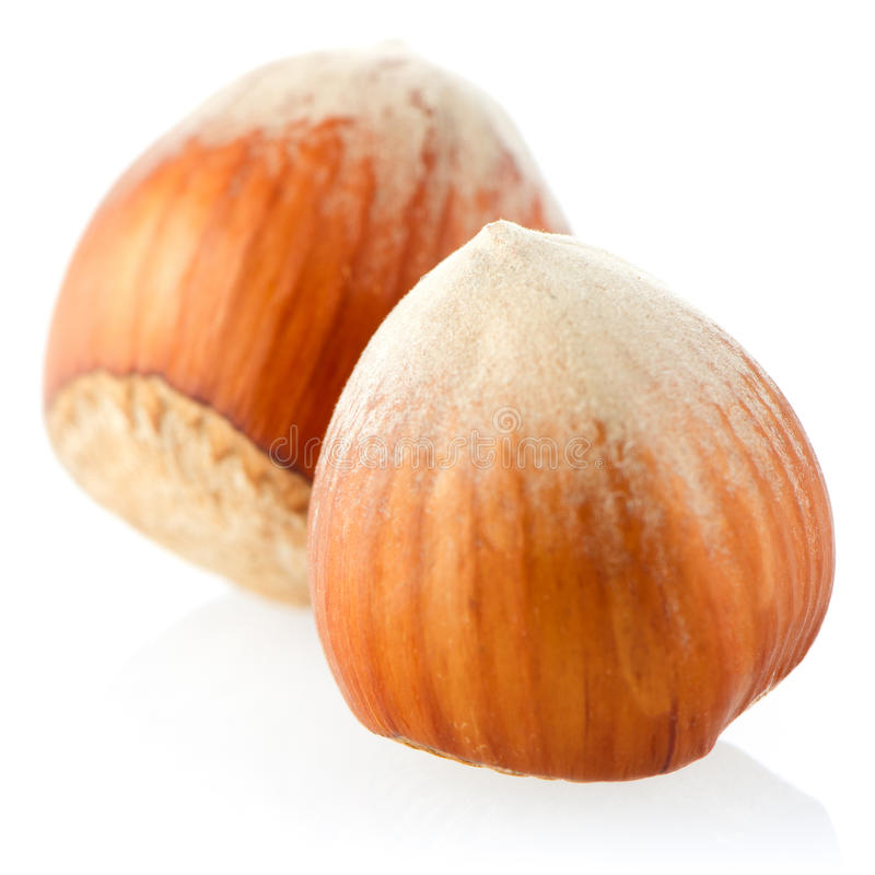 Three hazelnuts royalty free stock photography