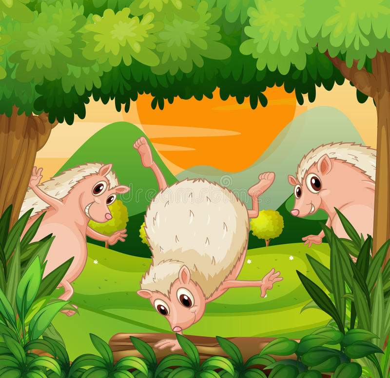 Download Three Hedgehogs Playing In The Woods Stock Vector - Image: 32676944