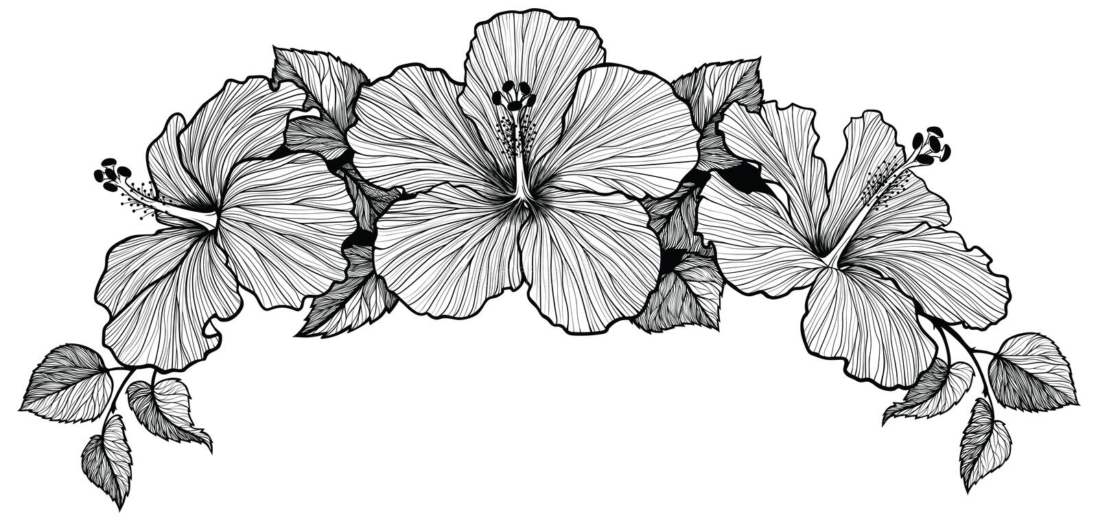 Black And White Pictures Of Hibiscus Flowers