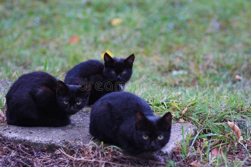 Three homeless little black cats sit on the street and freeze royalty free stock image
