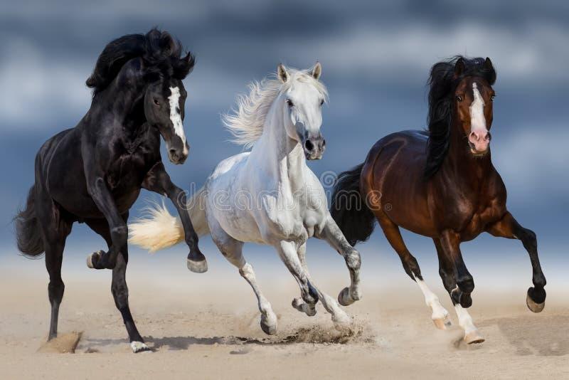 Three horse run. Three horse with long mane run gallop in sand stock photos