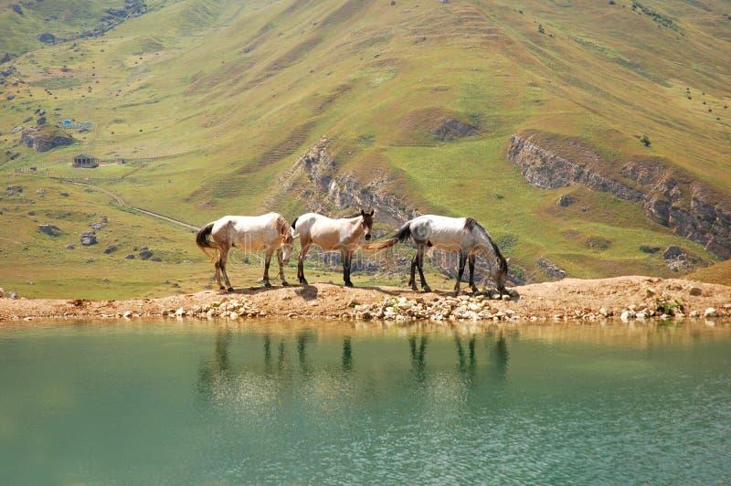 Three horses stock photography