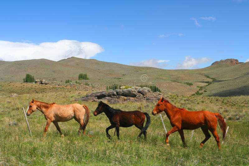 Download Three Horses On A Meadow Royalty Free Stock Photography - Image: 20727927
