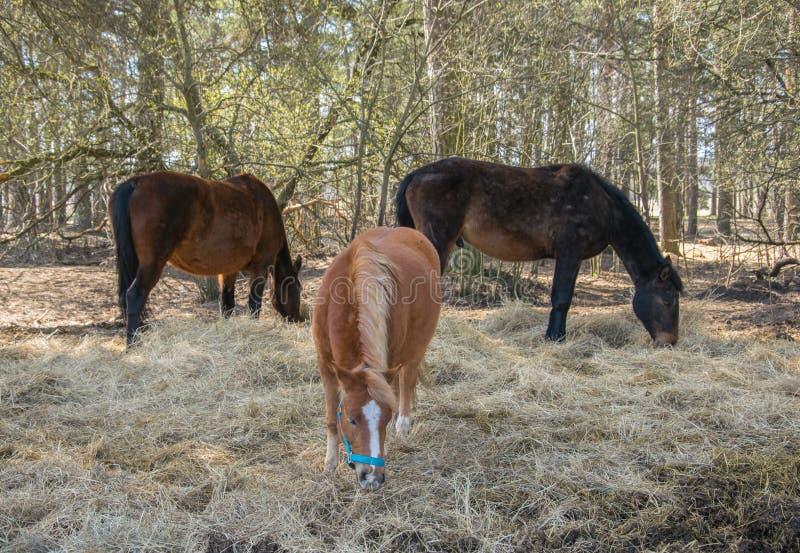 Three horses graze in the meadow. Three beautiful horses. stock image