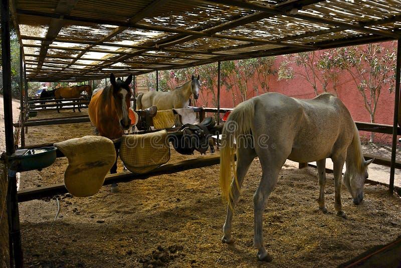 Three horses inside a paddock stock image