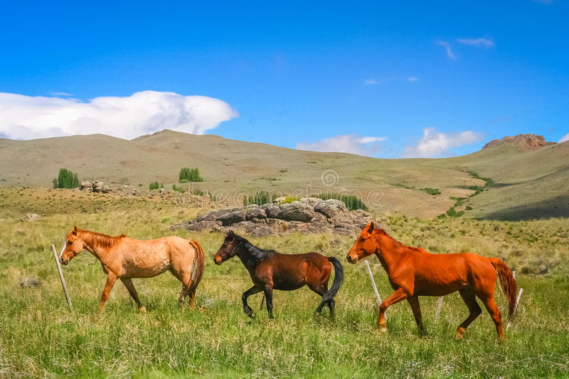 Three Horses on a meadow stock photo