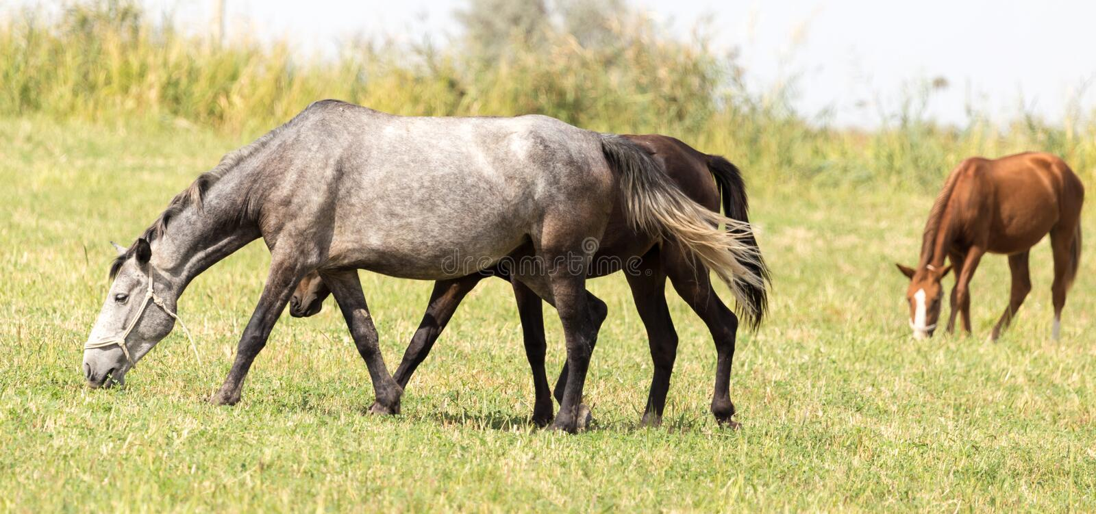Three horses in a pasture in nature stock photos