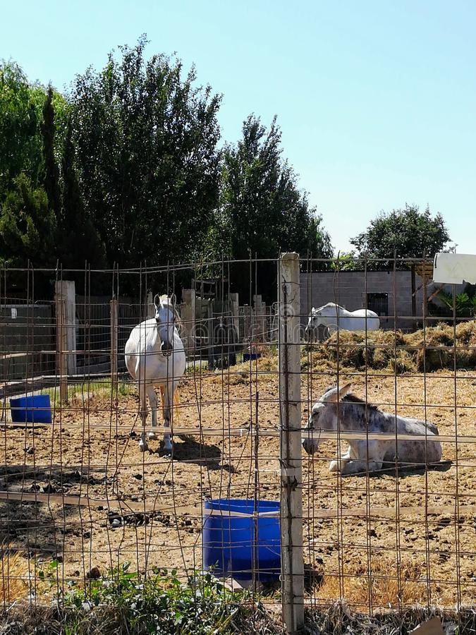 Three horses in a stable royalty free stock photos