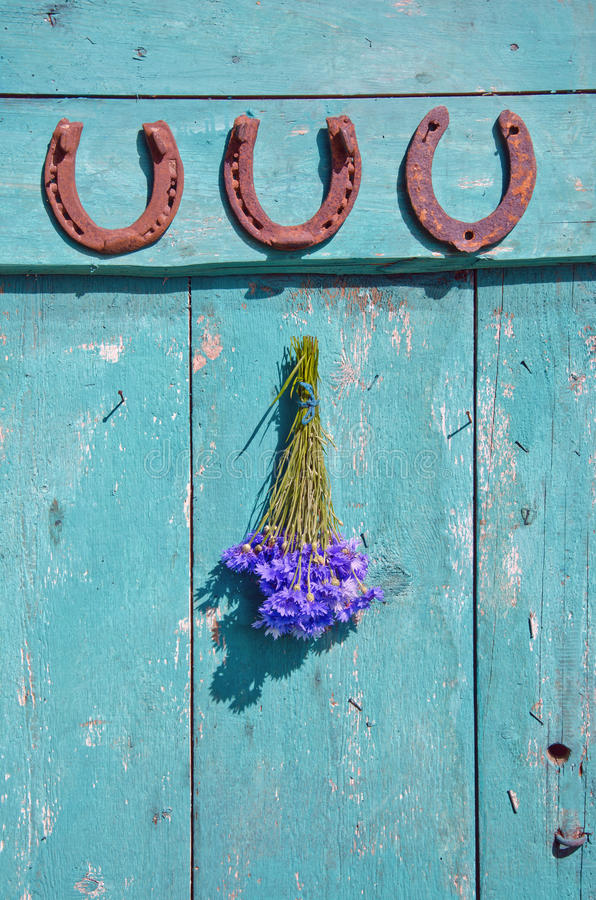 Three horseshoes and bunch of cornflowers hanging on oldwooden door royalty free stock image