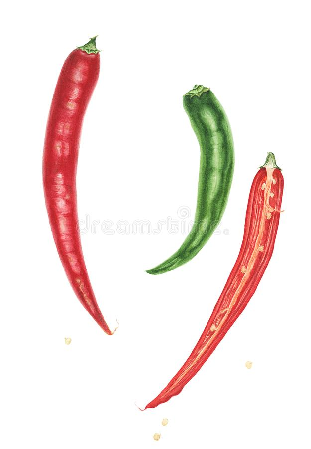 Three hot peppers, watercolor painting royalty free illustration