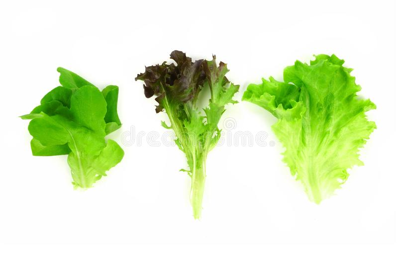 Three individual types of lettuce leaves, butter, red and green, isolated on white. Three individual types of lettuce leaves, butter, red and green leaf stock photos