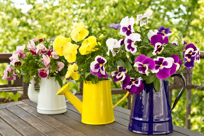 Three jugs with pansy bouquets. Three enamel jugs with pansy bouquets in different colors, colours royalty free stock photos