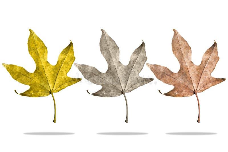 Three kind of seasonal leaves. On isolated white background royalty free stock image