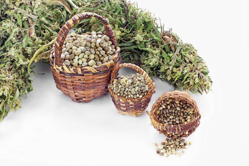 Three kinds of hemp seeds royalty free stock image
