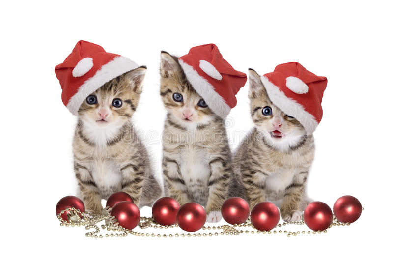 Three kitten with Santa cap. Christmas, three kitten with Santa cap on white background royalty free stock photo